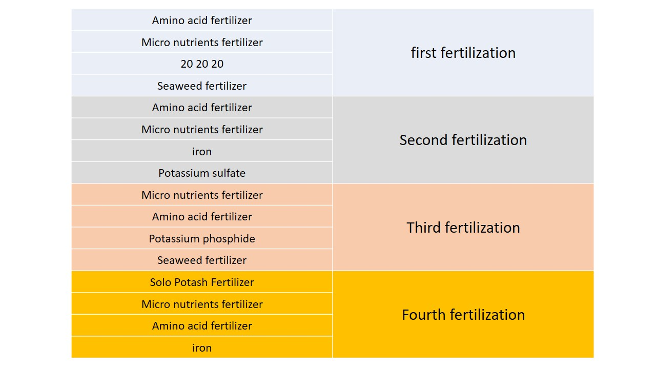 saffron fertilizing program